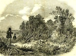 Pheasant Shooting, U.K., 1850