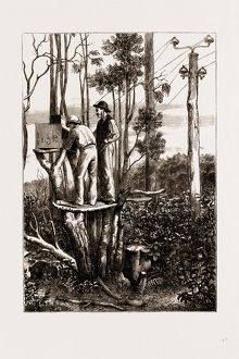 THE RECENT TRANSIT OF VENUS: PREPARING FOR WORK AT AN AUSTRALIAN BUSH STATION, 1875