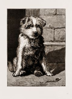 REGIMENTAL PETS: POKENO, DOG OF THE 50TH REGIMENT, A NEW ZEALAND HERO, 1875