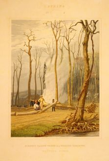 Spring--Burning fallen trees in a girdled clearing--Western scene / engraved by W