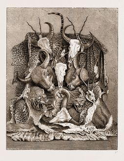 THE WILD GAME OF ASIA, HUNTING TROPHIES, 1876; ANTLERS