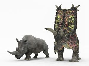 An adult Pentaceratops compared to a modern adult White Rhinoceros