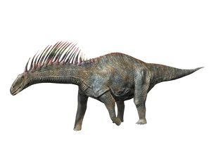 Amargasaurus is a sauropod dinosaur from the Early Cretaceous period