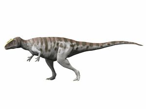 Carcharodontosaurus iguidensis, Late Cretaceous of Niger