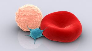 medical/conceptual image platelet red blood cell white