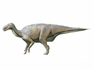 Delapparentia turolensis, Early Cretaceous of Spain
