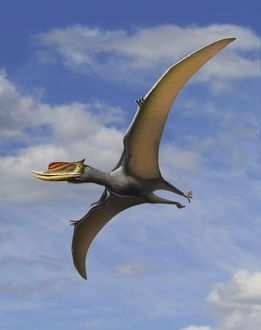 Dsungaripterus weii, a pterosaur from the Early Cretaceous Period