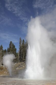 Grand Geyser erupting, Upper Geyser Basin geothermal area, Yellowstone National Park