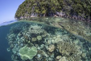A healthy coral reef grows near limestone islands in Raja Ampat