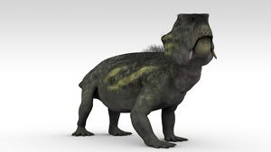 Lystrosaurus, a therapsid from the Permian and Triassic period