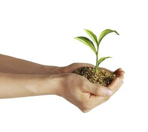miscellaneous/mans hands holding soil little growing green