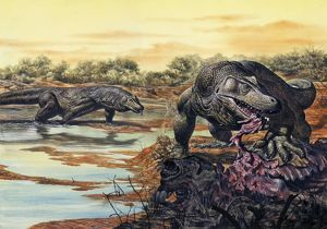 Megalania (giant monitor lizard) eating his prey, Pleistocene Epoch