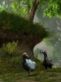A pair of Dodo birds waddle along a forest path