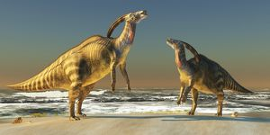 Two Parasaurolophus dinosaurs bellow at each other