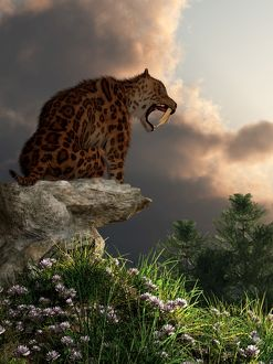 Smilodon Californicus sits atop a rock at the top of a hill