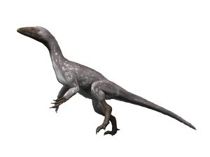 Tawa hallae is a theropod dinosaur from the Late Triassic of New Mexico