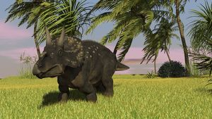 Triceratops roaming a tropical environment