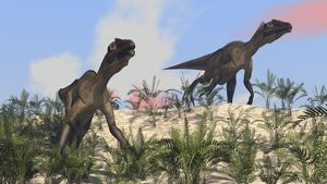 Two Utahraptors in an arid climate