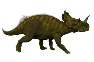Side view of a Centrosaurus dinosaur