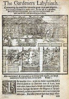 The Gardener's Labrynth by Thomas Hill, 1577