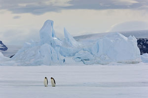 Emperor penguins (Aptenodytes forsteri) with iceberg at Snow Hill Island rookery