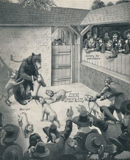 'Bear-Baiting in a Stuart Bear Pit', c1934. Artist: Unknown