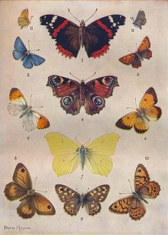 'Beautiful Butterflies of the British Isles', c1934. Artist: Unknown.