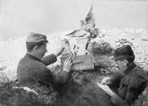 Messenger pigeons being released at the front line, World War I, 1915. Artist: Unknown