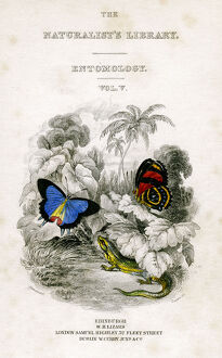 'The Naturalist's Library, Entomology, Vol V', Butterflies, c1833-1865
