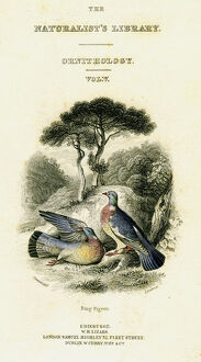 'The Naturalist's Library, Ornithology Vol V, Ring Pigeon', c1833-1865