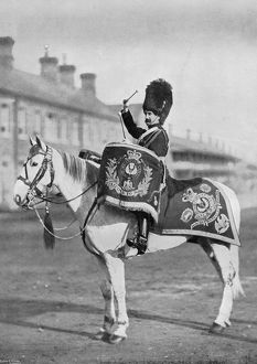 'Plum Duff', the drum-horse of the Royal Scots Greys, 1896. Artist: Gregory & Co