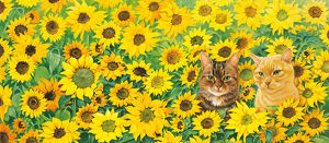 IC H100 Blossom and Spiro in Sunflowers