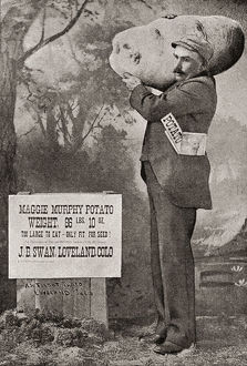 vintage/biggest potato record 1879 maggie murphy potato