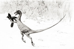 The Bird Catching Ornitholestes Dinosaur In The Act Of Catching The Jurassic Bird