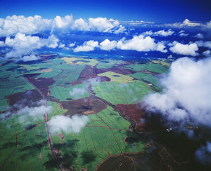 Hawaii, Maui, Aerial View Of Sugarcane Fields In Central Maui