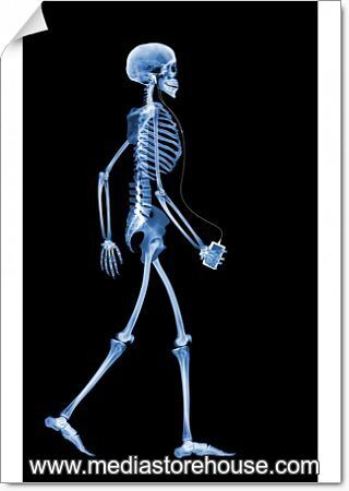 Poster Print Of Skeleton Drinking X Ray Human Skeleton